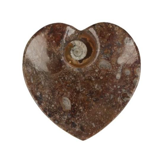 ammoniet-fossiel-schaaltje-hartvorm